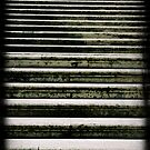 Roman Steps by Catherine Hadler
