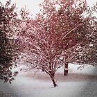 FIRST SNOW by Van Coleman