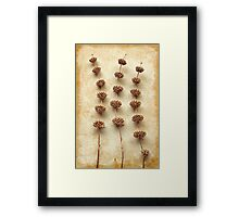 Dried Sage Framed Print