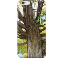 Beautiful Branches iPhone Case/Skin