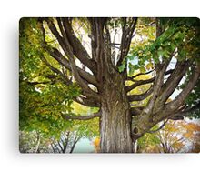 Beautiful Branches Canvas Print