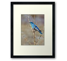 Blue in spring Framed Print