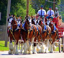 Budweiser Crew & Clydesdale Horses by bubbledrew
