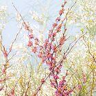 glorious spring by terezadelpilar~ art & architecture
