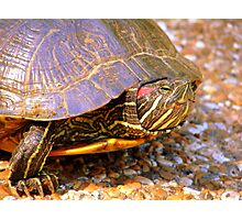 Turtle Love Photographic Print