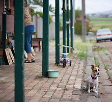 Watch Dog by Mandi Whitten