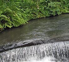 Calm Green Water Flows by Chitrakar