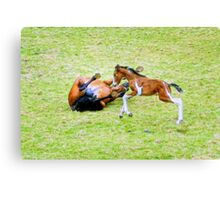 Time to Frolic Canvas Print