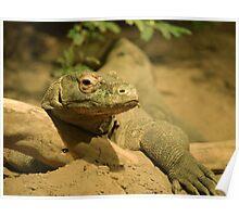 Komodo Dragon Poster
