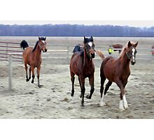 Running Colts Photographic Print
