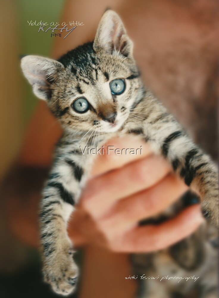 Yiddie Kitty © Vicki Ferrari Photographer by Vicki Ferrari