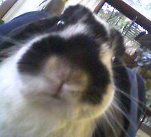 Winnie the Rabbit by ~  Virginia ~