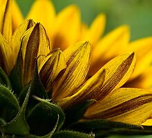 You are my sunshine by Celeste Mookherjee