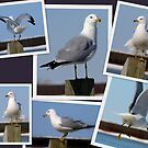 My Winter Gull.... An Ole Salty... by Larry Llewellyn