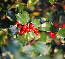 Holly Berries by sarahshanely