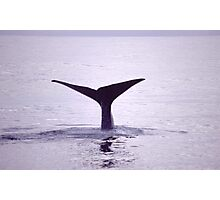 Whale Tail after whale dives in Kaikoura New Zealand Photographic Print