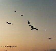 Soaring Sunset Seagulls © Vicki Ferrari Photography by Vicki Ferrari