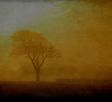 A Tree at Sunset by rosedew