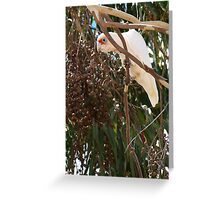 who's looking at who? Greeting Card