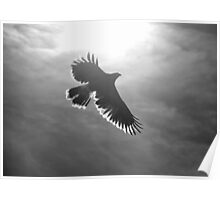 Silhoutte of a Hawk  Poster