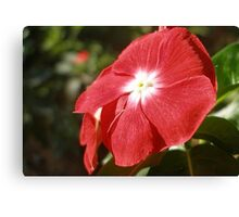 Close Up Of A Red Busy Lizzie Flower Canvas Print