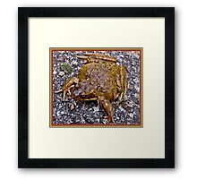 """ Saw this fine Chap on our path this Morning"" Framed Print"