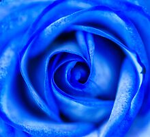 Abstract Macro Blue Rose by MMPhotographyUK