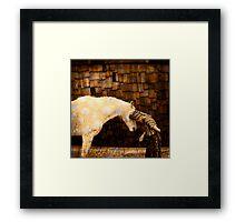 Horse Language Framed Print