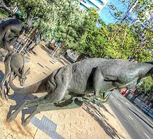 Kangaroos In The City 3 - Perth WA - HDR by Colin  Williams Photography