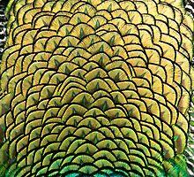 Peacock Art by Karen Kaleta
