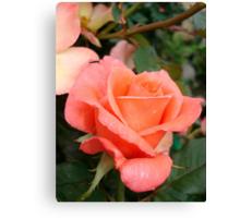 Coral Rose Canvas Print