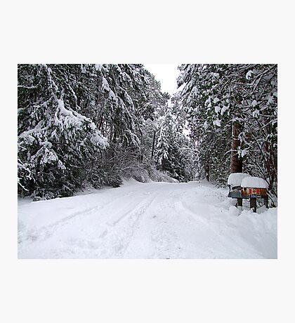 My Snowy Road Photographic Print