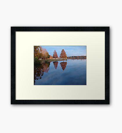 Cypress on Point - Autumn Framed Print