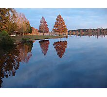 Cypress on Point - Autumn Photographic Print