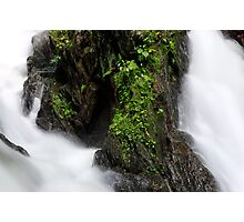 An Island of Green Photographic Print