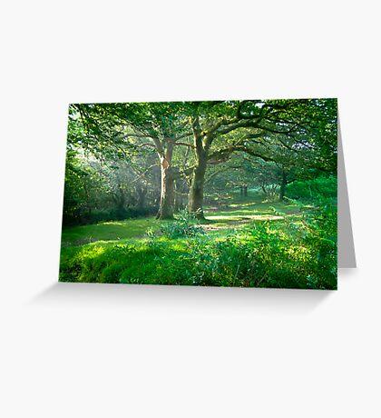 Sunlit Glade: Dartmoor (Near Goodameavy) Devon UK Greeting Card