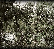 Weeping Willow by CindyG
