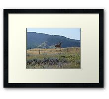 And over she goes... Framed Print