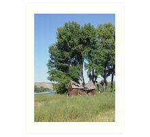 Barn in the Cottonwoods Art Print