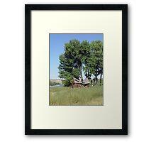 Barn in the Cottonwoods Framed Print