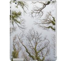 Trees Reaching for the Sky iPad Case/Skin