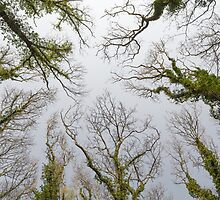 Trees Reaching for the Sky by Inimma