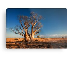 An Old Kimberley Boab Metal Print