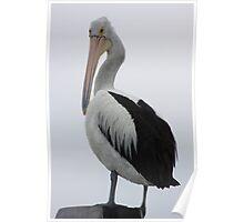 Pelican Look Poster