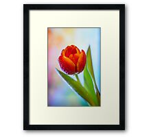 One red tulip Framed Print