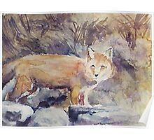 THE FOX(C1992) Poster