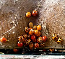 I Know Where The Ladybugs Sleep by WildestArt
