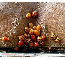 I Know Where The Ladybugs Sleep Photographic Print