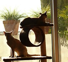Two cats by garryr