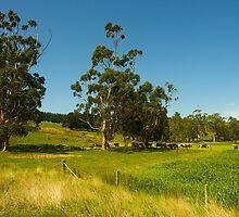 Farmscape#2, Warragul, Gippsland, Australia. by johnrf